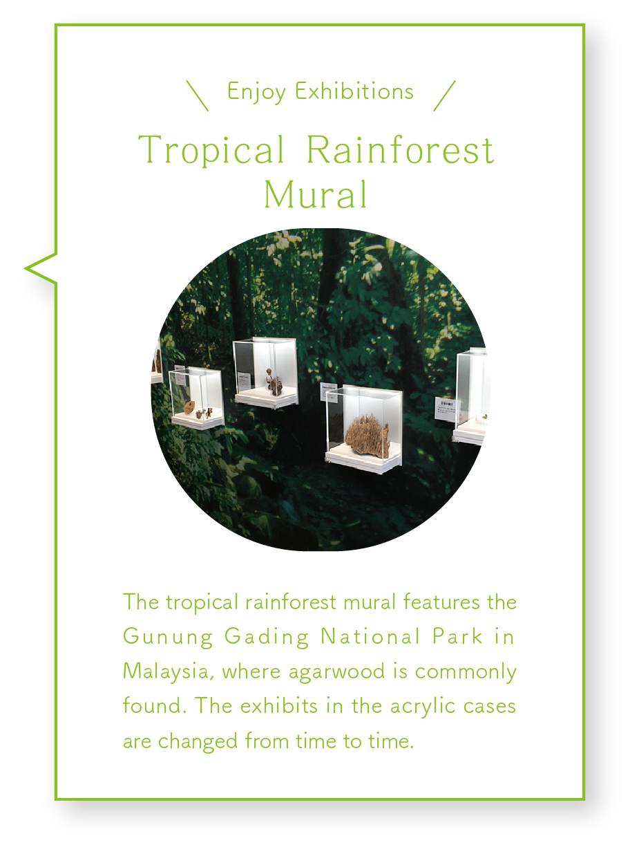 Tropical Rainforest Mural