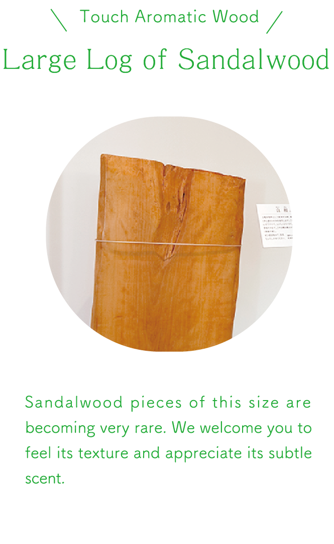 Large Log of Sandalwood